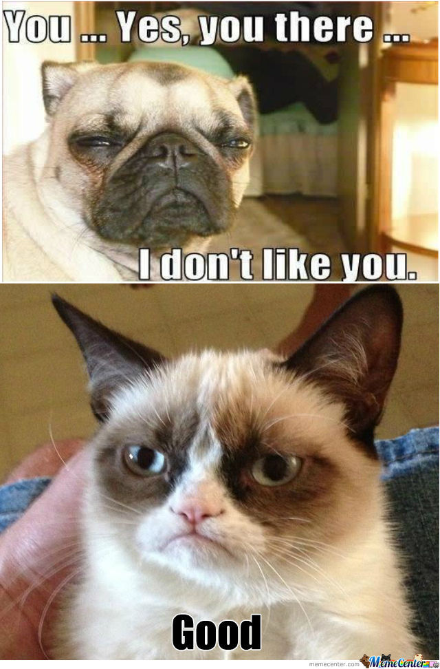 You Yes You There Grumpy Cat Memes