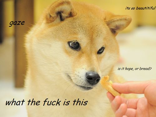 doge meme gaze its so beautiful is it or bread `