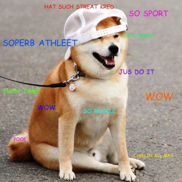 doge meme hat such streat kred so sport