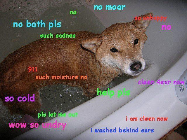doge meme no moar no no bath pls so unhappy such sadness