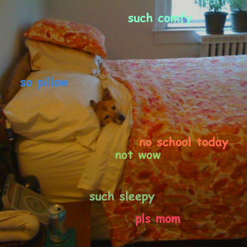 doge meme such comfy so pollow no school today