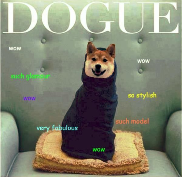dogue wow wow such glamour wow so stylish doge meme