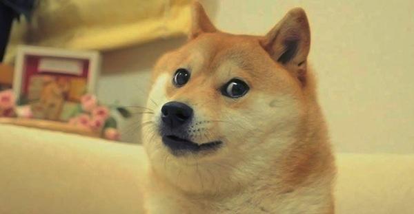 new doge meme