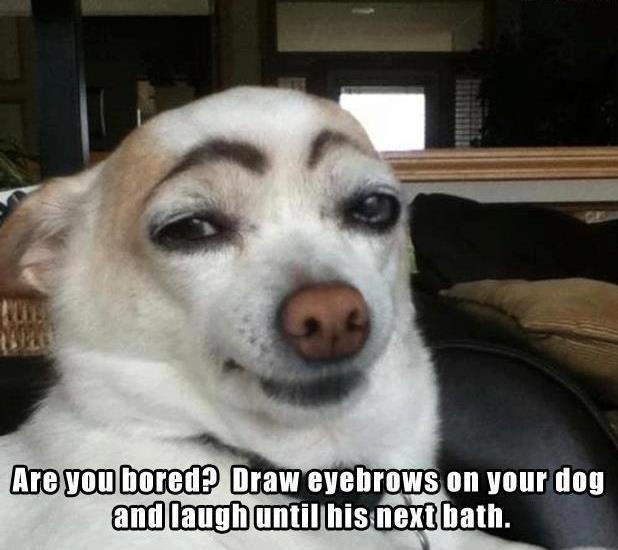 Are you bored draw eyebrows on your dog Dog Meme