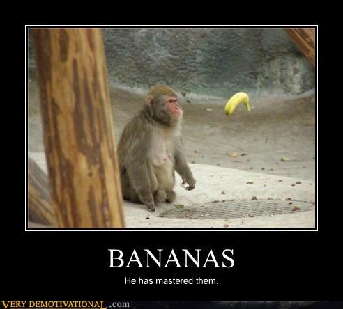 Bananas he has mastered them Monkey Memes