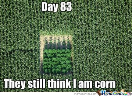 Camouflage Meme Day 83 they still think i am corn