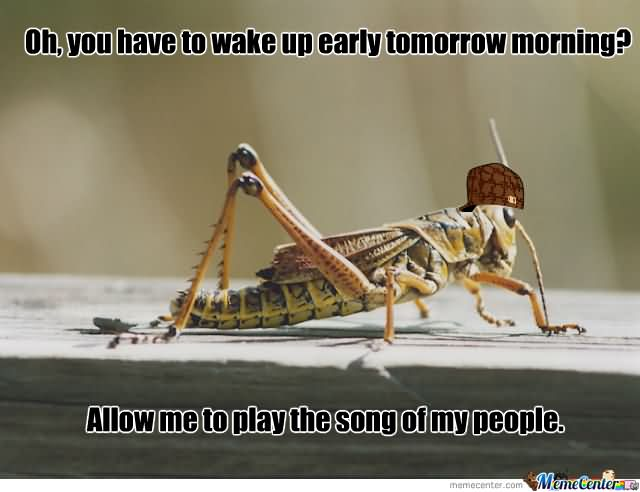 Cricket Meme Oh you have to wake up early tomorrow morning allow me