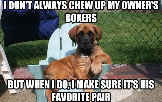 Dog Meme i don't always chew up my owner's boxers