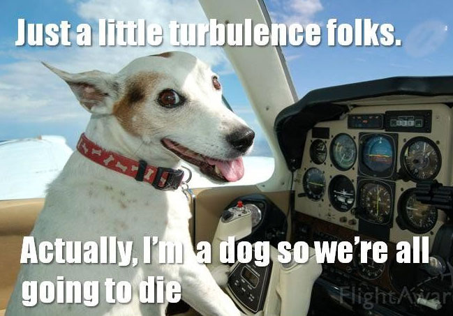 Dog Meme just a little turbulence folks actually