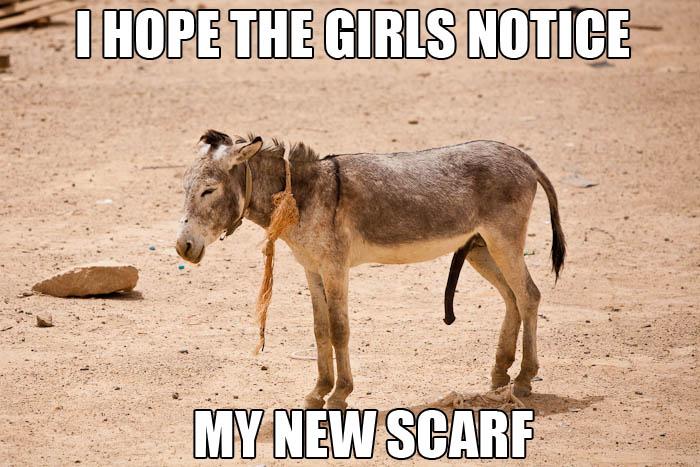 Donkey Meme I hope the girls notice my new scarf