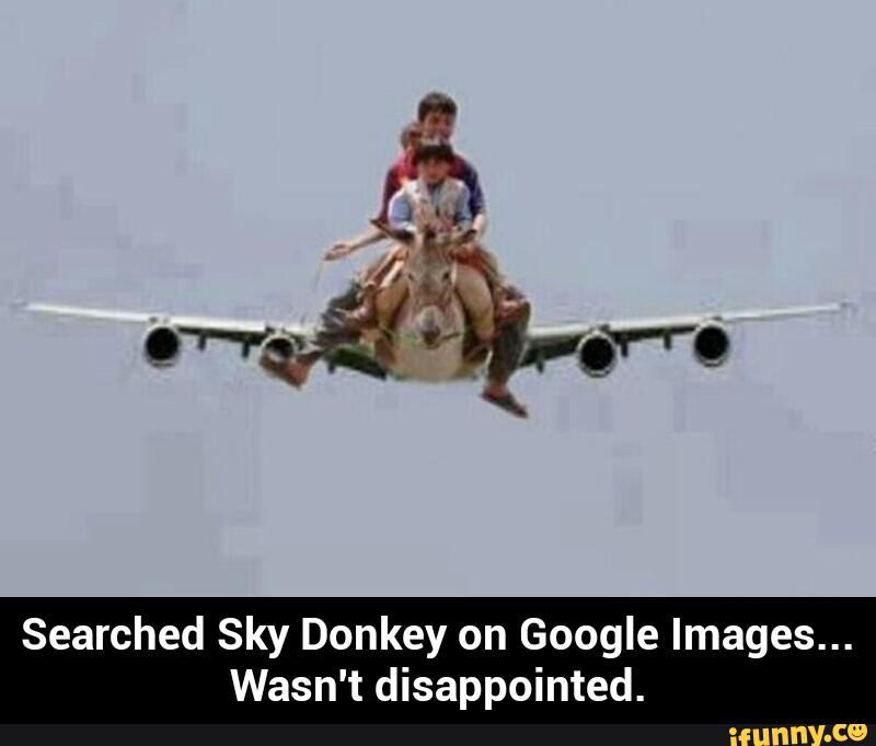 Donkey Meme Searched sky donkey on google images