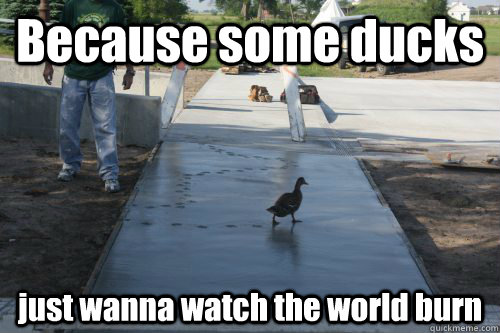 Duck Memes Because some ducks just wanna watch the