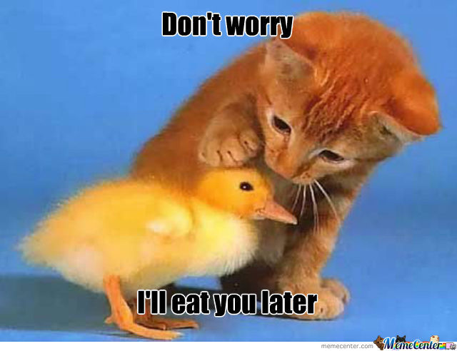 Duck Memes Don't worry i'll eat you later