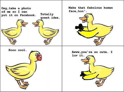 Duck Memes Omg take a photo of me so i can put it on facebook