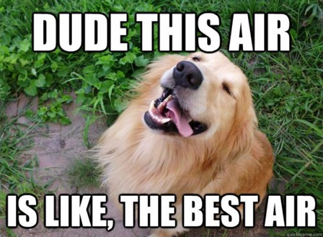 Dude This Air Is Like The Best Air Bored Meme
