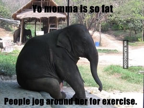Elephant Meme Fo momma is so fat people jog around her for