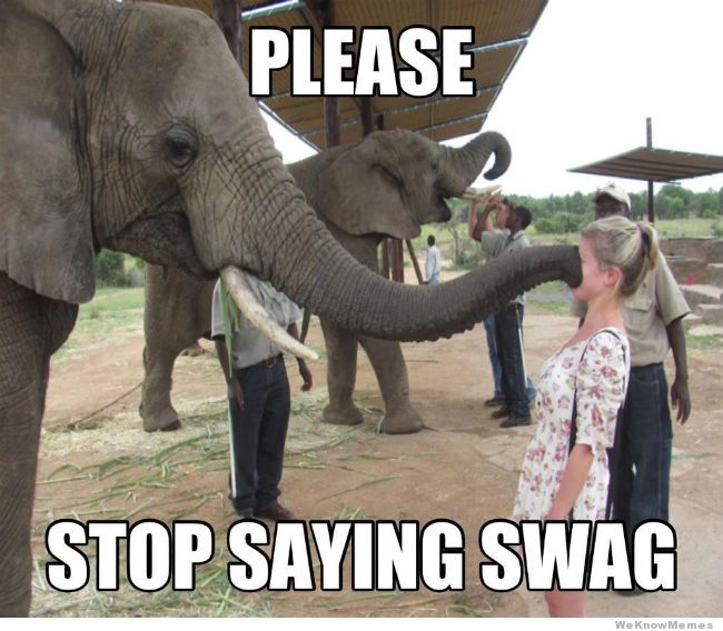 Elephant Meme Please stop saying swag