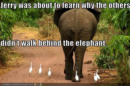 Elephant Meme jerry was about to learn why the others didn't walk behind the