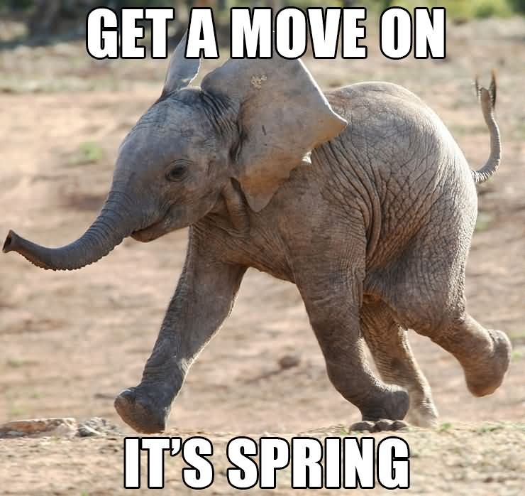 Get a move on it's spring Elephant Meme