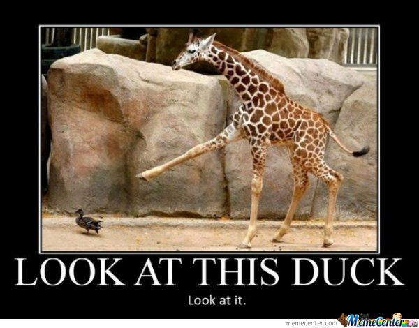 Giraffe Meme Look at this duck look at it