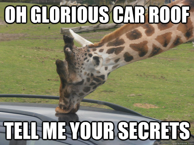 Giraffe Meme Oh glorious car roof tell me your secrets