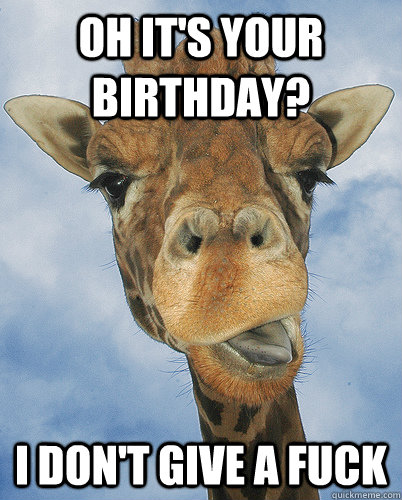Giraffe Meme Oh it's your birthday i don't give a fuck