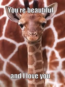 Giraffe Memes You 're beautiful and i love you