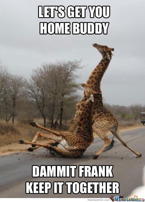 Giraffe Meme lets get you home buddy dammit frank