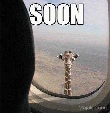 Giraffe Meme soon