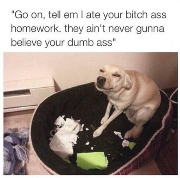 Go on tell em i ate your bitch Homework Meme