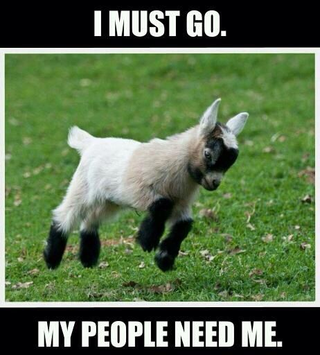 Goat Meme I must go my people need me