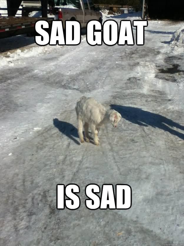Goat Meme Sad goat is sad