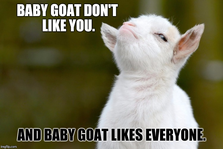 Goat Meme baby goat don't like you and baby