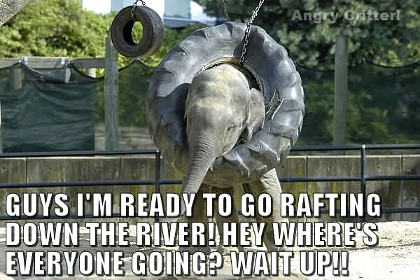 Guys I'm ready to go rafting down the river hey where Elephant Meme