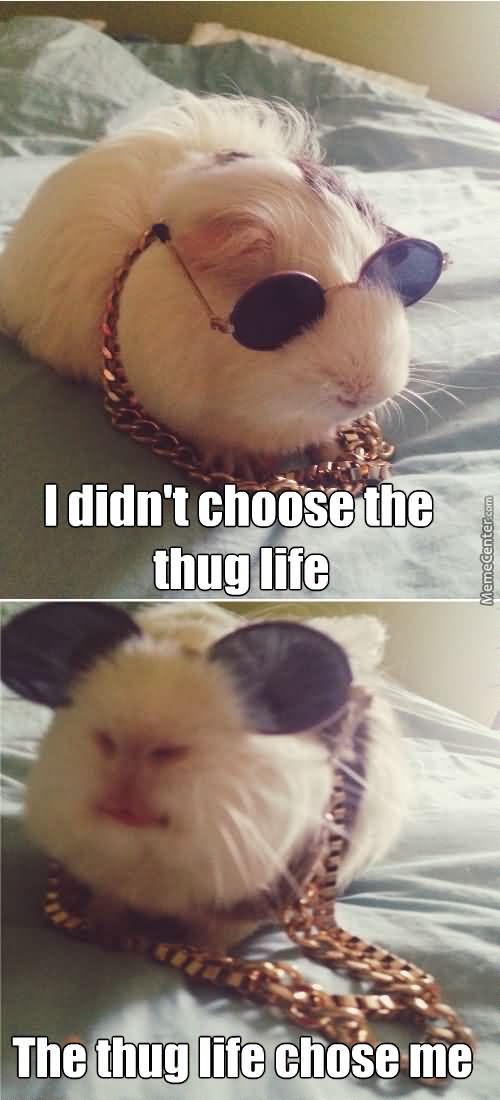 Hamster Meme I didn't choose the thug life the thug