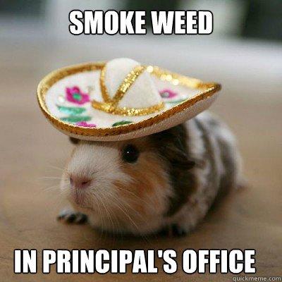 Hamster Meme smoke weed in principal's office