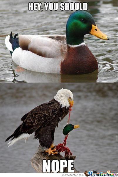 Hey you should nope Duck Meme hey you should nope duck meme picsmine,Duck Meme
