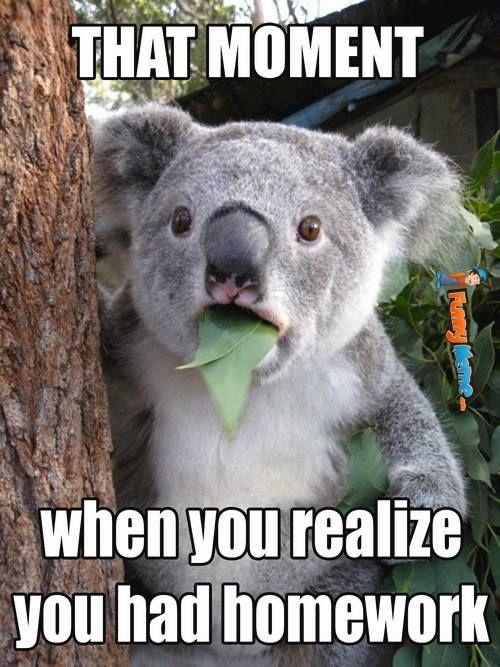 Homework Meme That moment when you realise you had homework