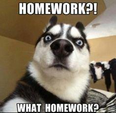 Homework what homework Memes
