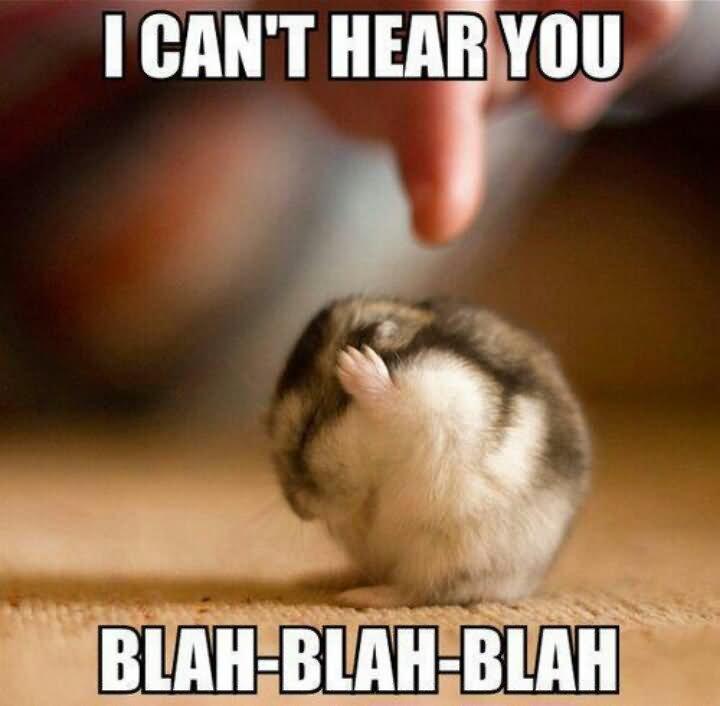 I cant hear you blah blah blah Hamster Meme