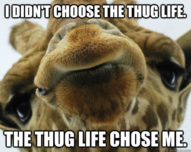 I didn't choose the thug life the thug Giraffe Meme