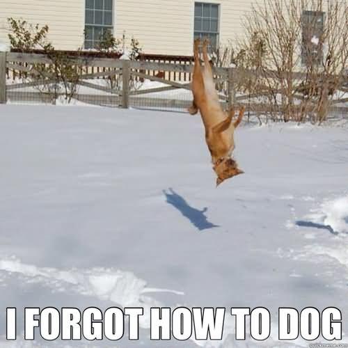 I forgot how to dog Golf Meme