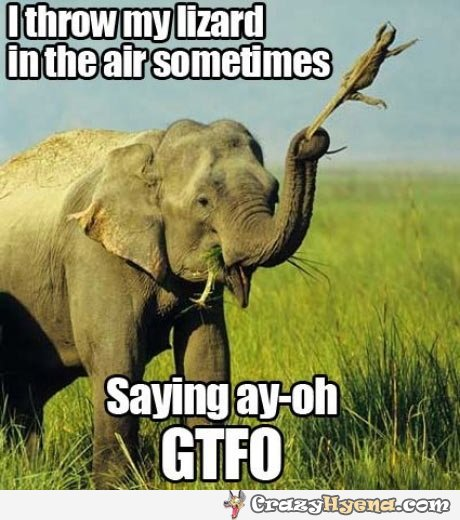 I throw my lizard in the air sometimes saying ay oh gtfo Elephant Meme