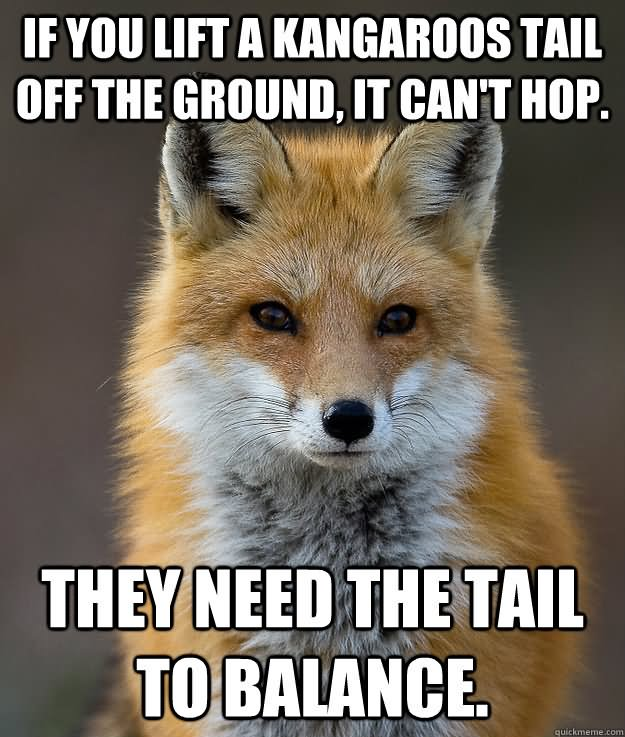 If you lift a kangaroos tail off the ground Kangaroo Meme