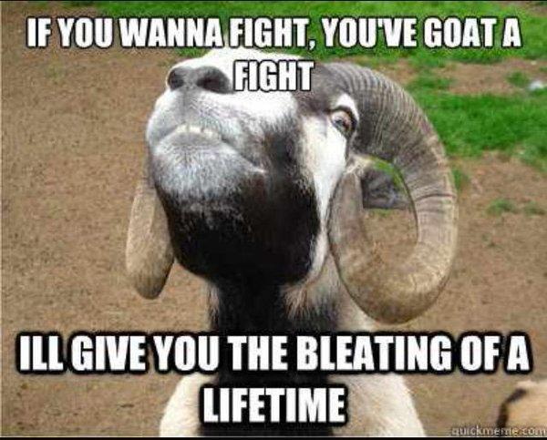 If you wanna fight you've goat a fight Goat Meme