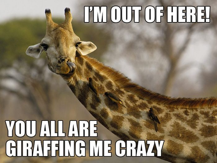 Im out of here you all are Giraffe Meme