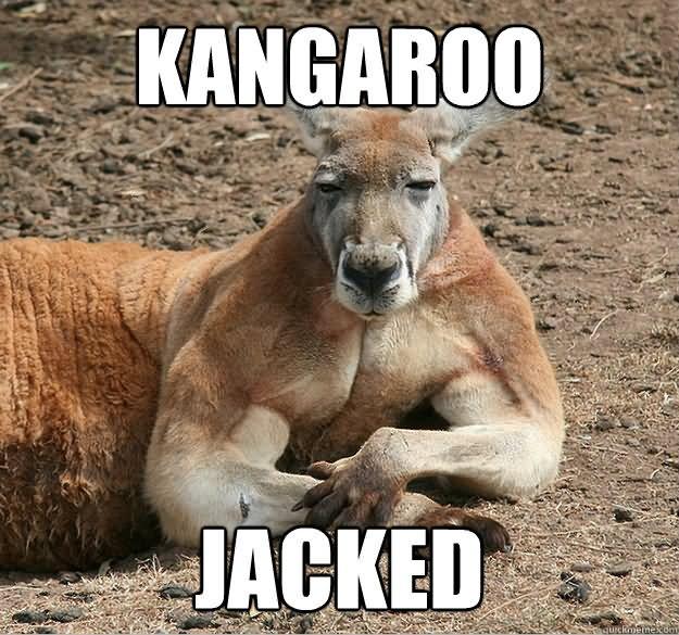 Kangaroo Meme Kangaroo jacked