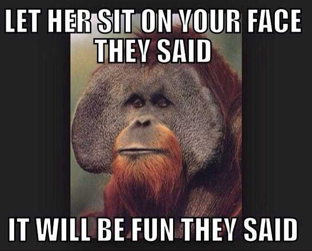 Kangaroo Meme let her sit on your face they said