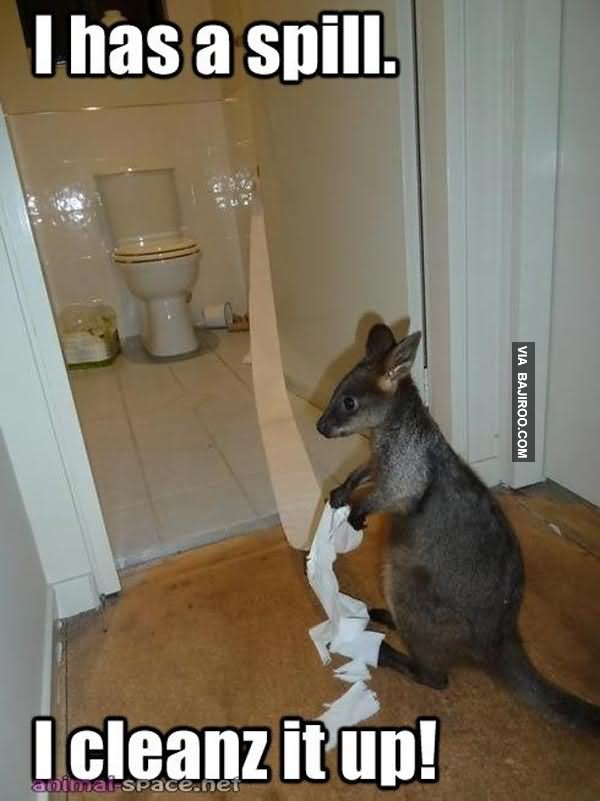 Kangaroo Memes I has a spill i cleans it up