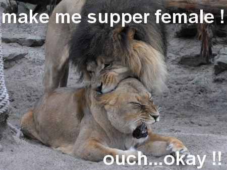 Lion Meme make me supper femake ouch okay